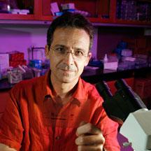 José Alberola-Ila, M.D., Ph.D.