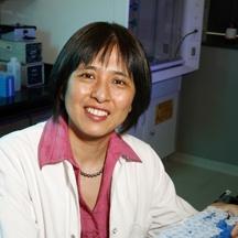 Xiao-Hong Sun, Ph.D.