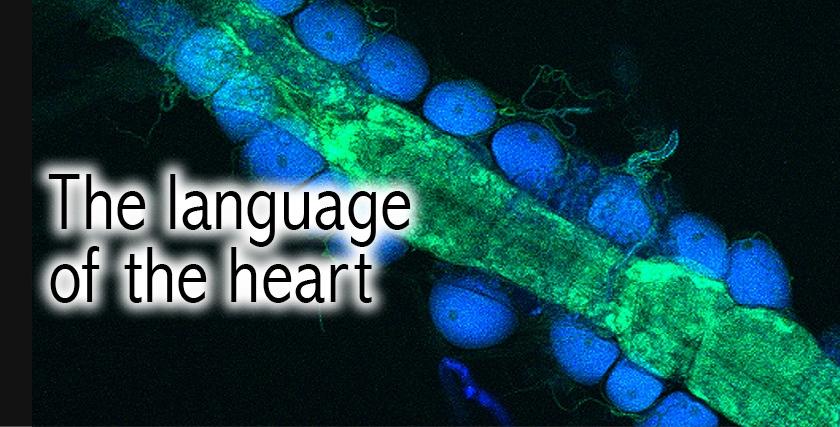 Heart Language_Carousel