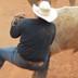 steer-wrestling-72x72