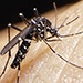 Zika virus: What Oklahomans need to know