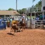 Kingfisher hosts steer wrestling benefit for OMRF