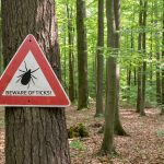 "Lyme disease: A ""ticking"" time bomb?"